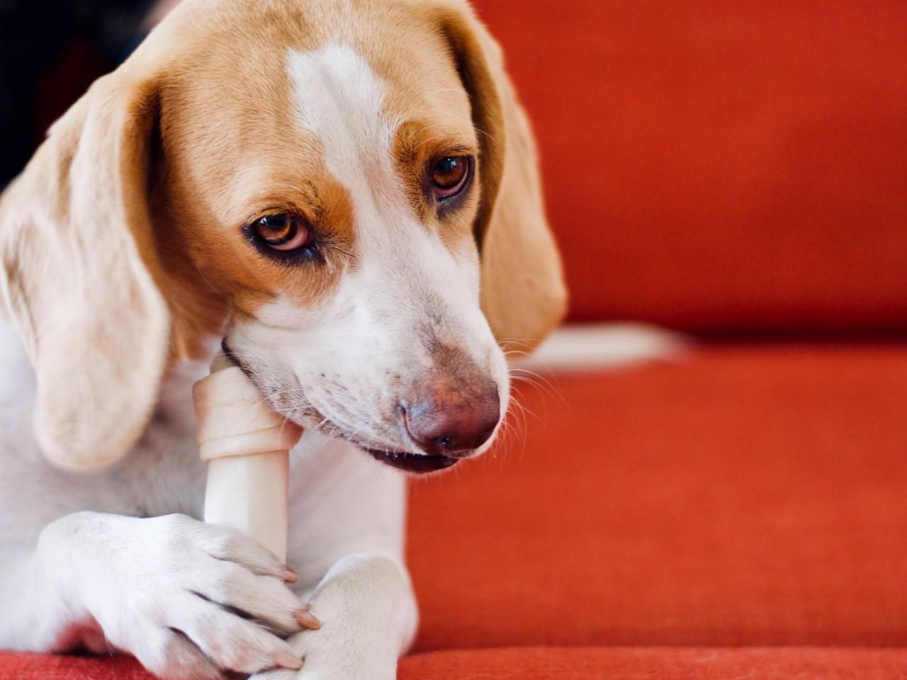 Lecker wars, das Hundefutter aus Untertürkheim